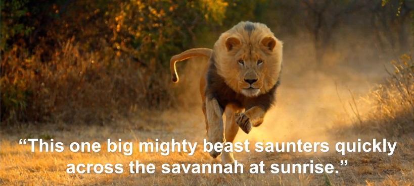 lion sentence